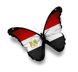 Egyptian flag butterfly, isolated on white