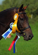 A beautiful winner dressage horse