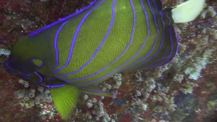 poisson de récif gros plan