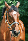 portrait of beautiful relax  sportive  mare