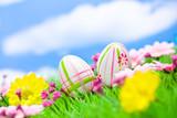 Fototapety Ostereier auf Blumenwiese