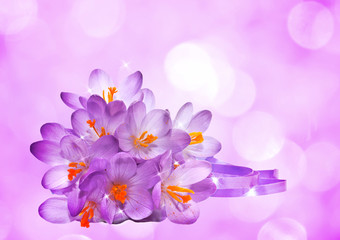 Purple background with flowers of crocus