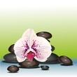 орхидеи белые фон