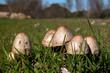 piccoli funghi sul prato 2