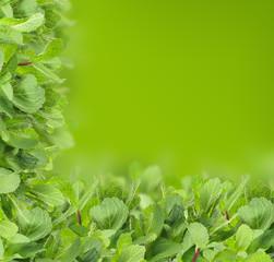 Mint background - green leaf border