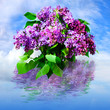 Beautiful flower lilac