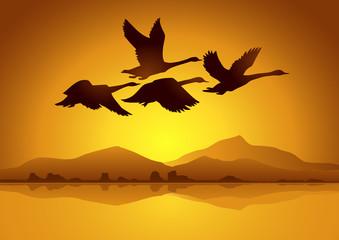 Kazlar gün batımında