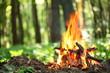 Leinwandbild Motiv Bonfire in the forest.