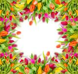 Beautiful tulips frame