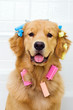 Happy Dog wearing colorful hair curlers