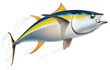 Yellowfin tuna - 39884481
