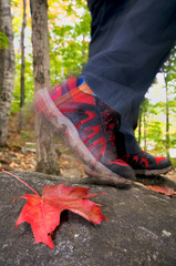 Hiker in forest with focus on colored leaf