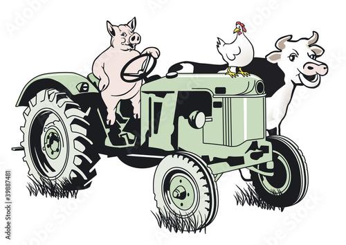Schwein auf dem Traktor