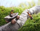 Fototapete Straßen - Story - Insekten