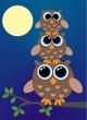 three brown owls