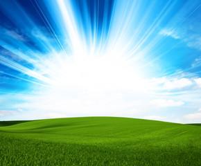 sunlight green field