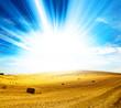 sunlight harvest
