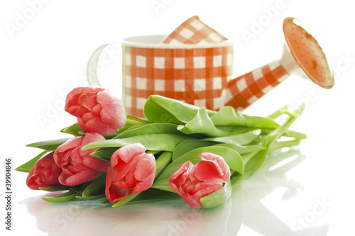Watering can with tulips