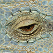 A close-up image of an eye of a lizard