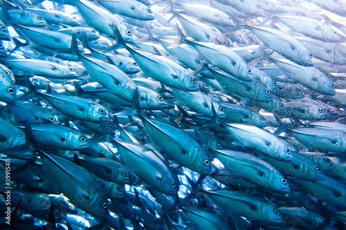 Leinwandbild Motiv wall of tuna