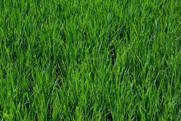 Background grass closeup