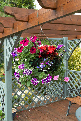 Full hanging basket