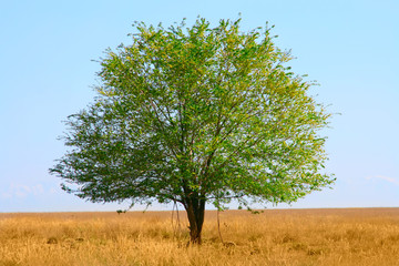 green tree  in field