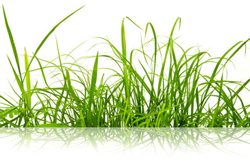 Reflect of Green fresh grass isolated.