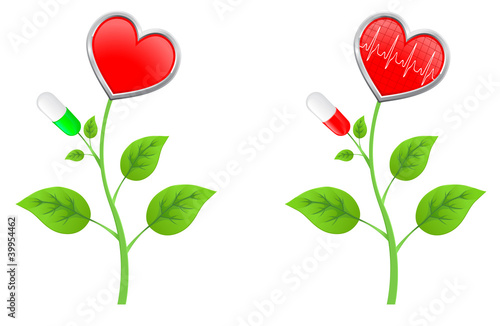 green stem with leaves with a red heart and a diagram