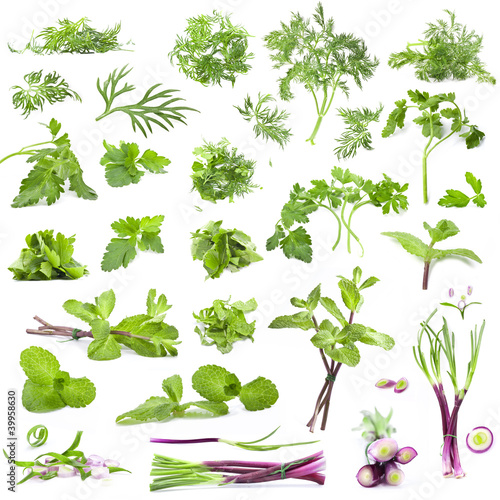 Collection parsley, mint, dill and onion on white background