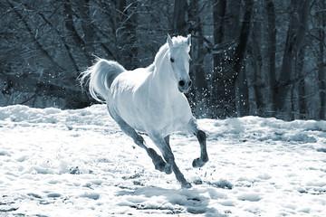 Skipping white horse