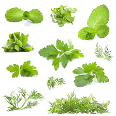 Parsley, dill and mint leaves on white background