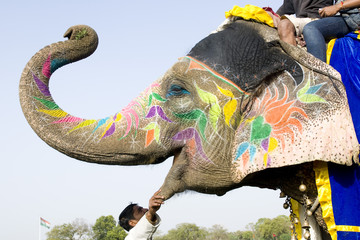 hand painted colorful elephant profile, Rajasthan, India