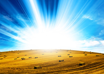 sunshine hay field