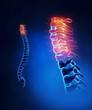 Cervical spine anatomy in detail