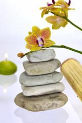 Orchidee auf Steinen