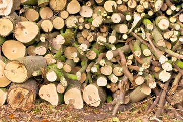 Baumschnitt, Gartenarbeit, Baumpflege, Rückschnitt, Brennholz