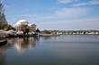 Washington DC Jefferson Memorial with Cherry Blossoms
