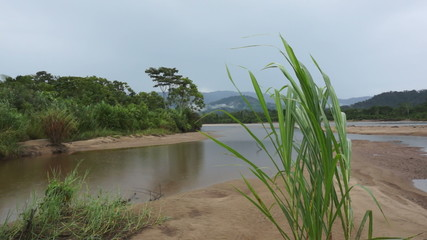 Ecuador River Grass Blowing in the Wind on a Rainy Day