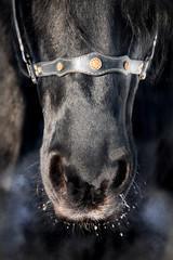 Horse black nose