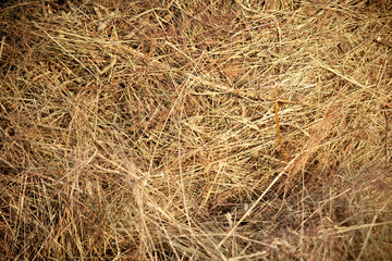 Straw closeup as background