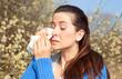 allergie weide birke