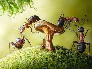 run, baby! robbers formica rufa and lasius, ant tales