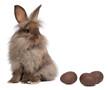 A chocolate lionhead bunny rabbit with chocolate eggs