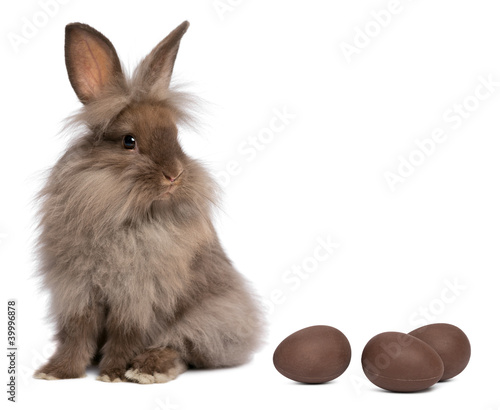 A chocolate lionhead bunny rabbit with chocolate eggs