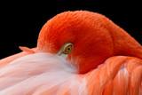 Fototapeta wodnych - dziób - Ptak