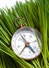 Compass and Green Grass