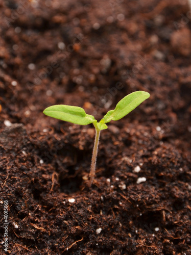 Young seedling