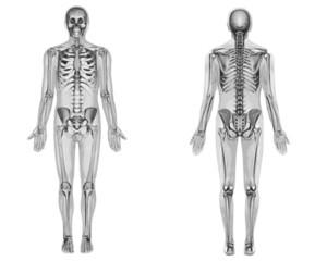 Squelette n&b