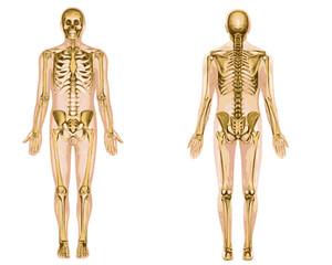 Squelette couleur